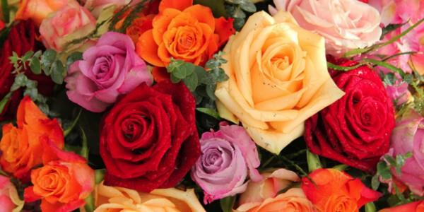 Au-nom-de-la-rose_roses