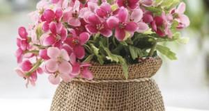 Florassimo Comparateur Fleuristes Achat De Fleurs