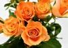 roses-3155337_960_720