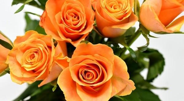 les diff rents types de fleurs offrir florassimo. Black Bedroom Furniture Sets. Home Design Ideas