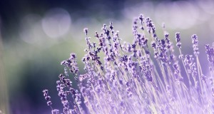 un-bouquet-fleurs-cadeau-fin-dannee.png